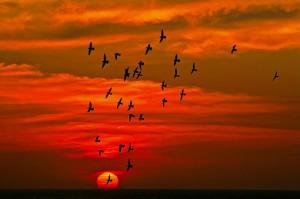 bird signs of Allah