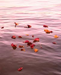 leaves floating, falling into pieces, falling apart
