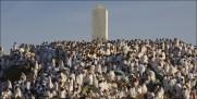Muslim pilgrims pray on a rocky hill called the Mountain of Mercy, on the Plain of Arafat near Mecca, Saudi Arabia, Sunday, Dec. 7. AP / Hassan Ammar