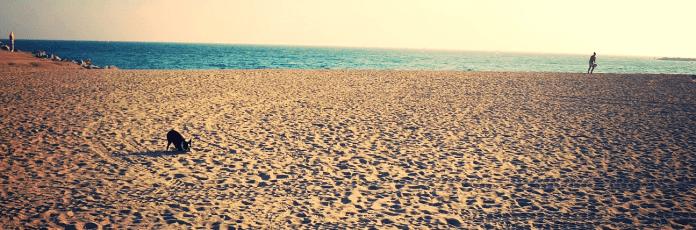 Barcelona Plaża Llevant Zawsze na wakacjach