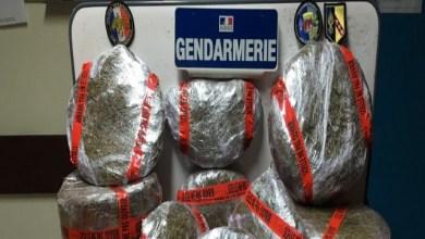Photo of #ZayActu : Démantèlement d'un trafic local de cannabis à Saint-luce | ZayRadio.org