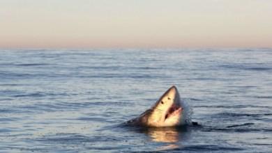 Photo of Un enfant d'une dizaine d'années attaqué par un requin en Nouvelle-Calédonie
