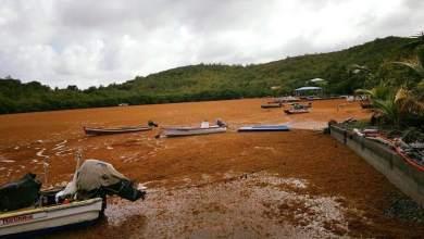 Photo of Importante invasion d'algues sargasses au quartier Presqu'île au François