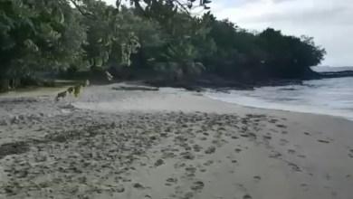 Photo of Polémique à Sainte-Luce : pas d'eaux usées déversées dans la mer par un hôtel