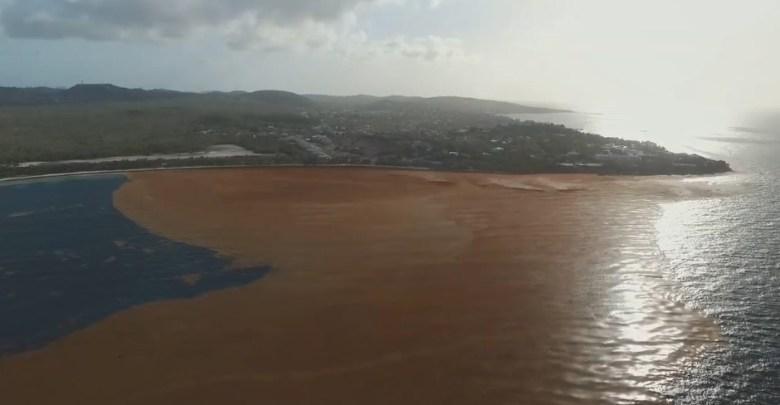 Impressionnante invasion d'algues sargasses sur la plage de Jabberwock à Antigua