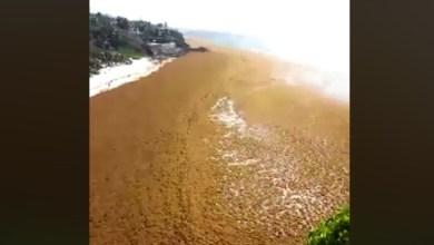Photo of La Barbade pas épargnée par les algues sargasses (Vidéo)