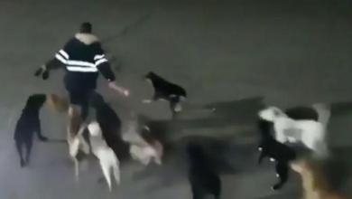 Photo of Une femme poursuivie par 11 chiens tuée et mangée par ces derniers