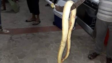 Photo of Un serpent découvert dans la salle de bain d'une maison au Gros-Morne
