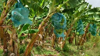 """Photo of """"Il va falloir se réveiller, car rien ne va en Martinique et tout le monde trouve ça normal"""""""