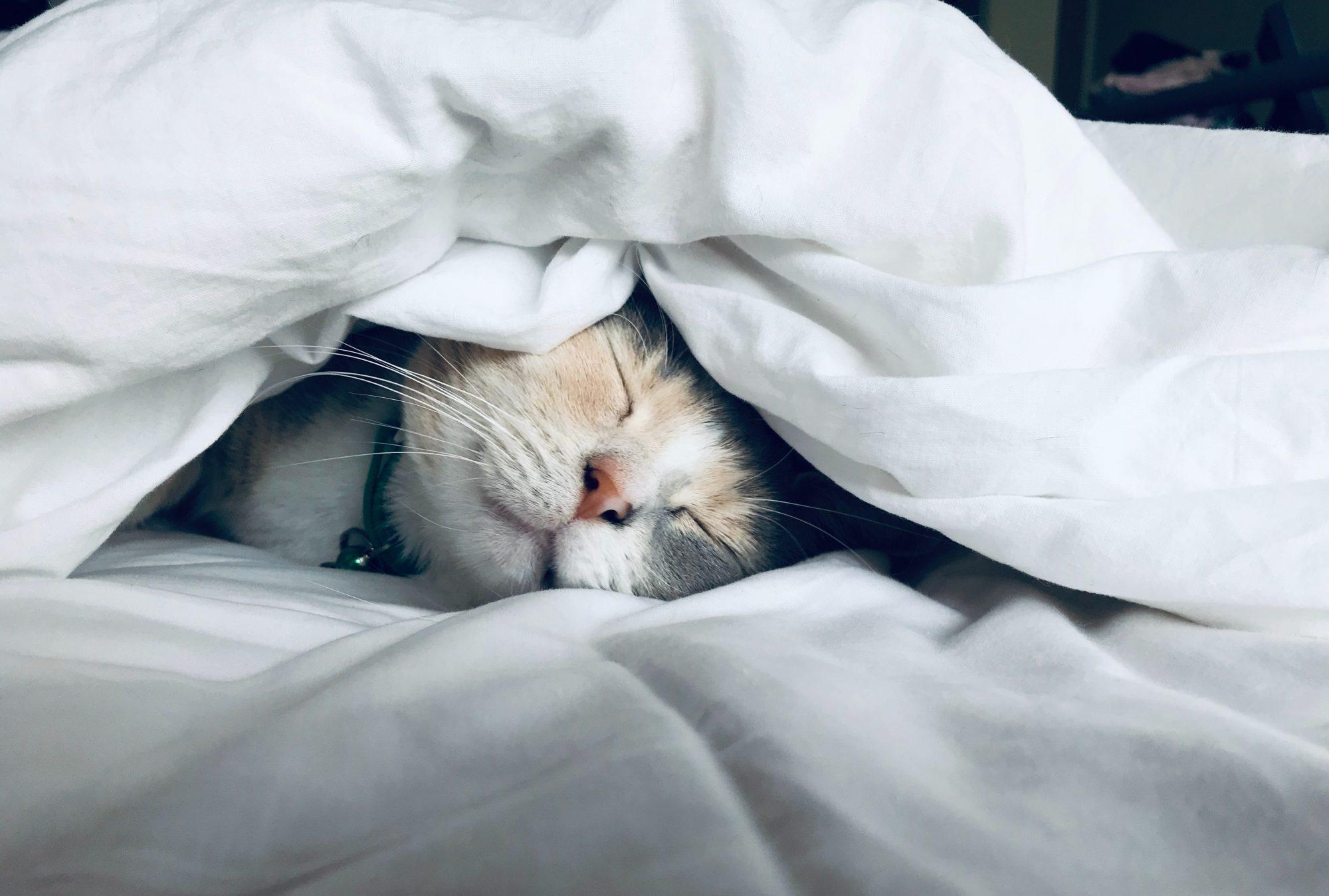 slaaptips