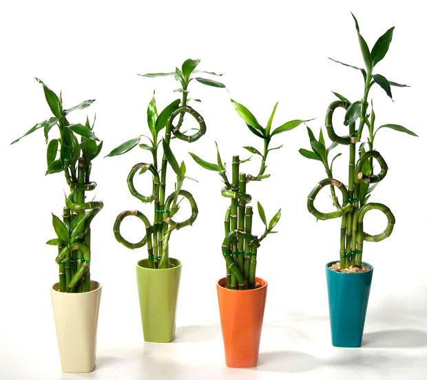 OTVORITE VRATA SREĆI: Ovu biljku morate imati u domu ako ŽELITE uspjeh i ZADOVOLJSTVO