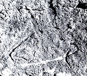 Alleged carving of Arab dhow on Mt Tauhara, Taupo, New Zealand