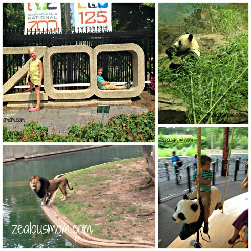 The National Zoo is free and so much fun! You must check it out during your next trip to DC. -zealousmom.com #nationalzoo #washingtondc