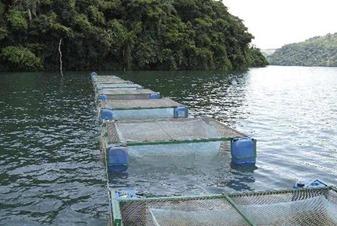lago de Tucurui