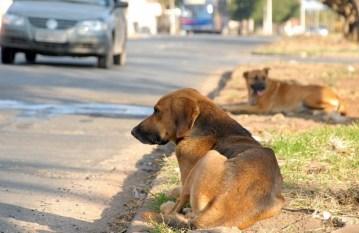 Vereadores querem regular a vida da bicharada em Marabá