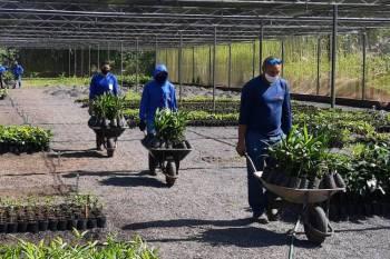 Agricultores familiares do Mosaico Lago de Tucuruí recebem mudas de plantas frutíferas