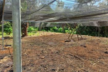 Tucuruí: Ideflor-Bio implanta viveiros de mudas na comunidade João Canuto