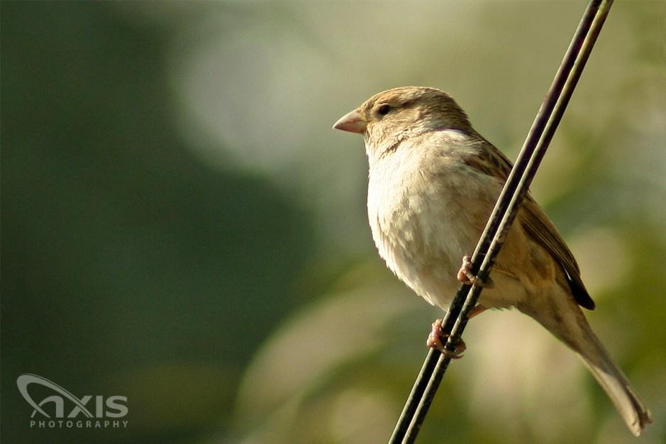 birds-02