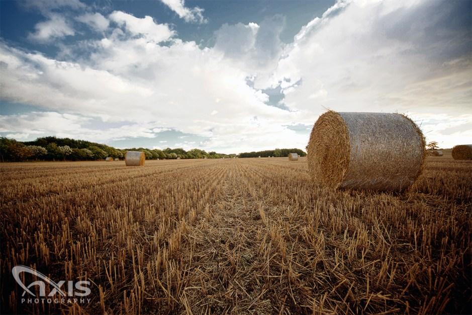 hay-field-02