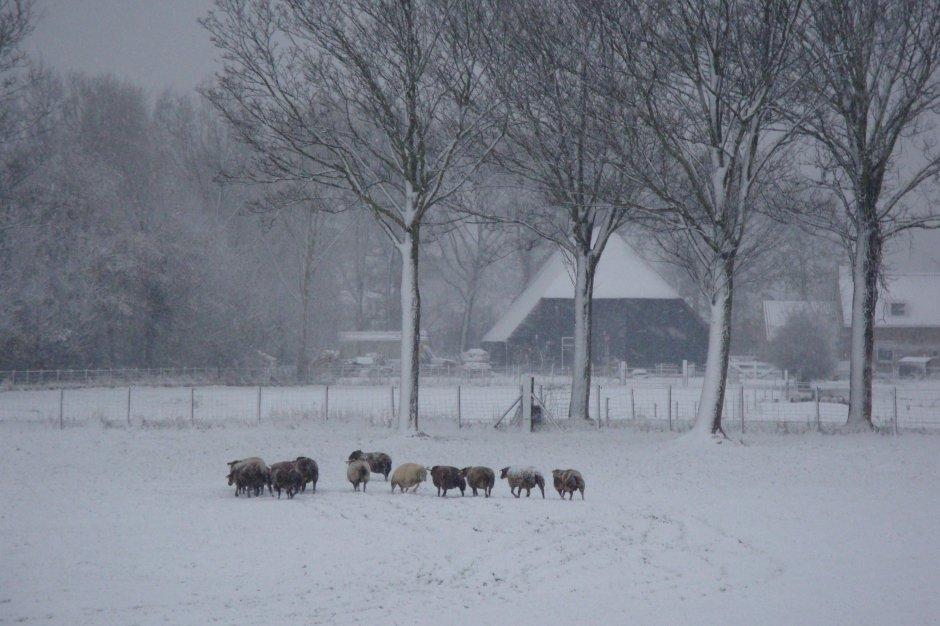 Sneeuw in Heinkenszand