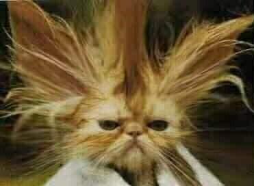 Verzopen kat  Quadmiep