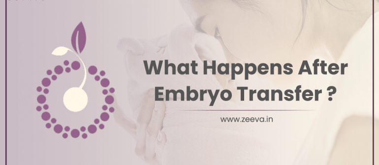 What Happens After Embryo Transfer?