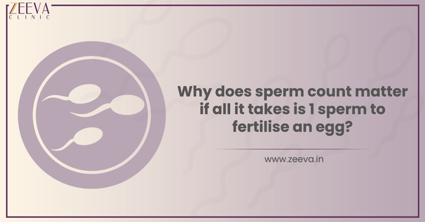 Why does sperm count matter if all it takes is 1 sperm to fertilise an egg?