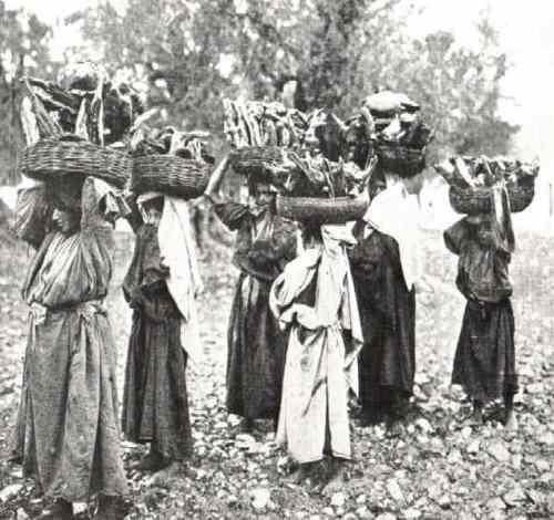 נשים בדואיות נושאות עצים להסקה 1893