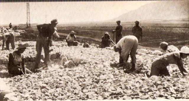 אנשי גדוד העבודה סוללים את כביש טבריה צמח