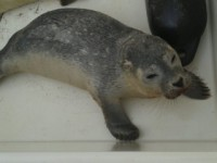 foto: stichting A Seal