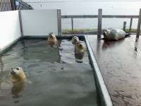 foto: Stichting ASeal