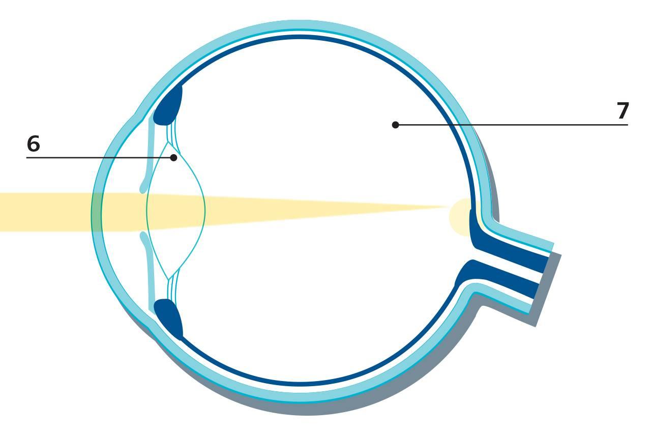 the eye its anatomy