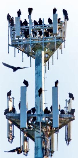 Mobilfunk stört den Vogelzug