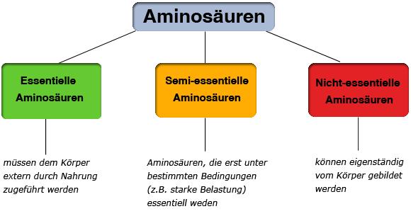 Aminosaeuren-Arten