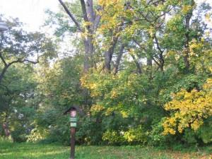 podzim-v-ptacich-ostrovech-7.48896397502e-17.jpg
