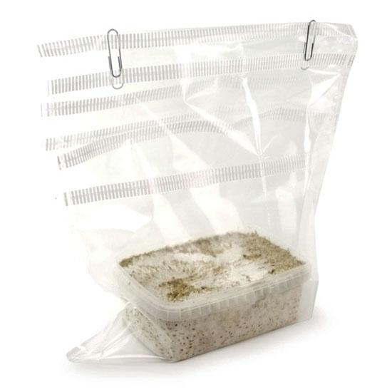 magic mushrooms grow kit filter bag