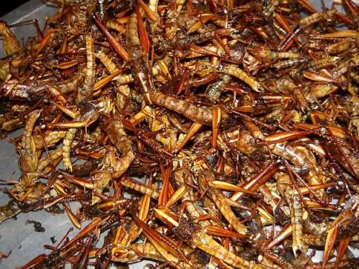 insectes grillés