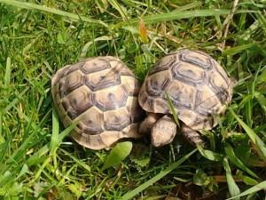 Urlaub Bauernhof Schildkröten (640x480)