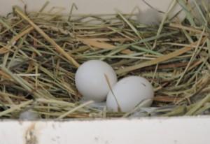 Taube Eier, Urlaub auf dem Bauernhof, Zeltnerhof