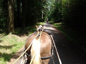 Kutschfahrt, Zeltnerhof, Urlaub auf dem Bauernhof, Obernb. Waldhaus