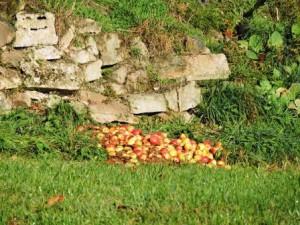 Äpfel, Bauernhofurlaub, Zeltnerhof