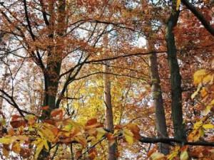 Baumkronen, Herbst, Zeltnerhof
