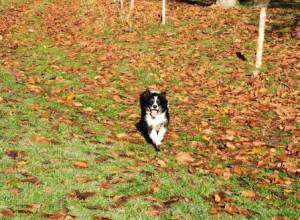 Hund, Herbstlaub, Zeltnerhof