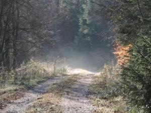 Urlaub auf dem Bauernhof Nebelweg