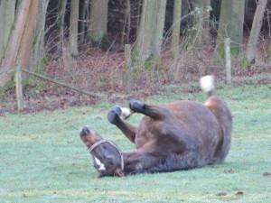 Winter Pferd wälz