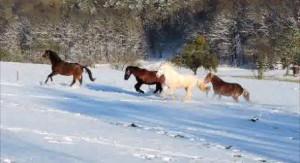 Pferde, Winter, Ferien auf dem Bauernhof