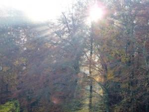 Sonnenstrahlen, Ferien auf dem Bauernhof, Herbst, Zeltnerhof