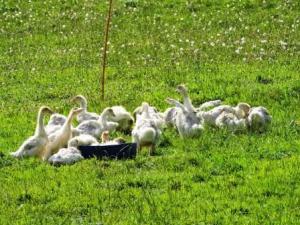 Neue Tiere auf dem Bauernhof