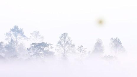 Crise : apprenez à piloter dans le brouillard