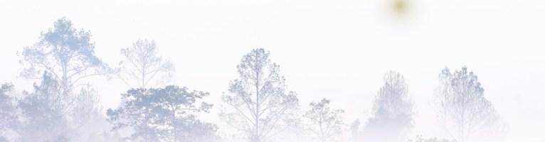 Survivre à la crise : apprenez à piloter dans le brouillard!